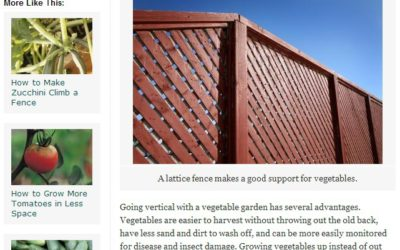 FENCE COMPANIES IN DENVER: HOW TO USE YOUR FENCE TO GROW VEGETABLES
