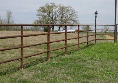 livestock-IMG-1618
