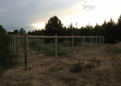 livestock-IMG_4445