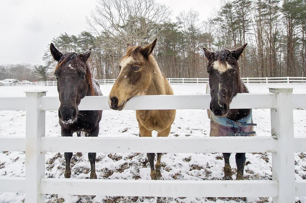 northern colorado vinyl fencing for livestock